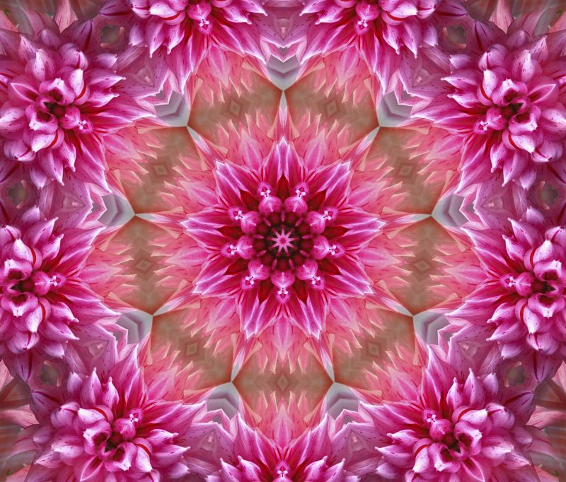Pink psychedelic flower