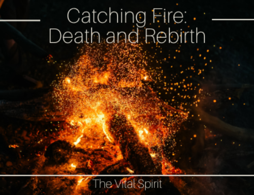 Catching Fire: Death And Rebirth
